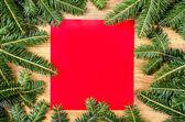 Christmas spruce frame — Stock Photo