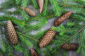 Christmas spruce background — Stock Photo