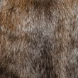 Mink fur — Stock Photo #38503655