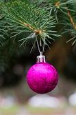 Ball on fir branch — Stock Photo