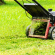 Foto de Stock  : Mowing grass