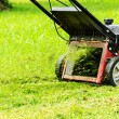 Stock Photo: Mowing grass