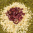 Seeds Spread a flat sheet — Stock Photo