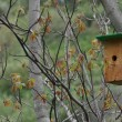 Birdhouse for birds — Stock Photo