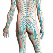 Human nervous system diagram. — Stock Photo