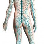 Human nervous system diagram. — Stock Photo