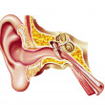 Human ear cutaway diagram. — Stock Photo
