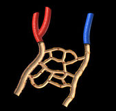 Human veins and arteries cutaway diagram, on black background, w — Stock Photo