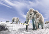 Two mammoth in a field covered of snow. — Stock Photo