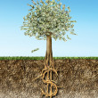 Stock Photo: Money tree in soil cross section showing US Dollar sign roots.