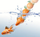 Mandarin splashing into water and transforming in a gold fish — Stock Photo