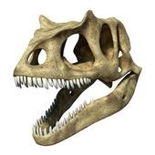 Photorealistic 3 D rendering of an Allosaurus skull. — Stock Photo
