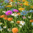 Stock Photo: Flowers of different colors, in grass field.