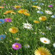 Flowers of different colors, in a grass field. — Stock Photo
