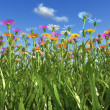 Постер, плакат: Flowers of different colors in a grass field