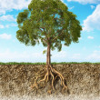 Cross section of soil showing a tree with its roots. — Stock Photo