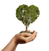 Woman's hands holding soil with a tree heart shaped. — Stock Photo