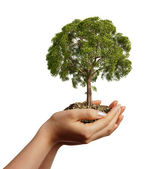 Woman's hands holding soil with a tree. — Stock Photo