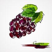 Grapes fruit — Stock Vector