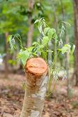 Cutoff the tree — Stock Photo