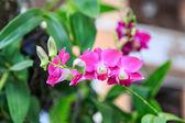 ツリー上のピンクの蘭 — ストック写真