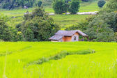 Cottage for wait harvest rice — Stok fotoğraf