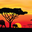 Sunset in Africa — Stock Vector