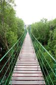 Wooden bridge go to mangrove forest — Stock Photo