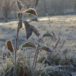 Leaves covered with hoarfrost, or white frost in the morning — ストック写真