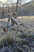Leaves covered with hoarfrost, or white frost in the morning — 图库照片