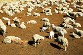 Sheep fold in Cordiliera Huayhuash — Stock Photo