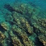 Stones under sea water. — Stock Photo #25701951
