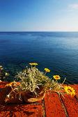 Bir monterosso al mare, cinque terre, i̇talya, avrupa — Stok fotoğraf