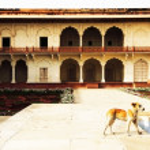 fort rouge d'Agra, un patrimoine mondial de l'unesco et un des touristes plus gros points forts, à seulement 2 km du taj mahal. construit par plusieurs empereurs moghol du xv et xvi siècle. uttar pradesh, Inde — Photo #25811421