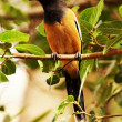 Bird on a tree — Stock Photo