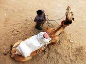 Camel in Thar Desert, India — Stock Photo