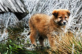 Estonian Hound puppy — Stock Photo