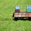 Hives on a meadow — Foto Stock