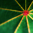 Macro of a green leaf - abstract background - Stock Photo