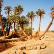 Trees  in the Sahara desert — Stock Photo