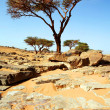 Trees  in the Sahara desert - Foto Stock