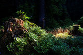 Jungle forest scenic background. — Stock Photo