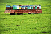 Hives on a meadow — Stock Photo