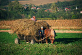 Hay on the wagon — Stock Photo
