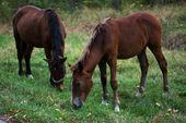 Horse eating on freedom — Stock Photo
