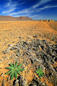 Cactus in Middle Atlas Mountains, Africa — Foto de Stock
