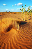 Sahara Desert landscape, Africa — Stock Photo