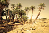 D Oum Laalag Oasis in Sahara Desert, Africa — Stock Photo