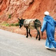 TODRA GORGES -  A donkey transports materials — Stock Photo