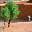 Tree in desert - Stock Photo